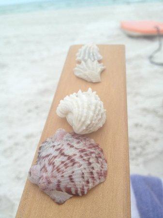 Siesta Beach: Tons of beautiful seashells