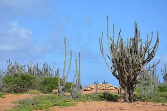 Bonairean Golf Club Piedra So: Tee mount