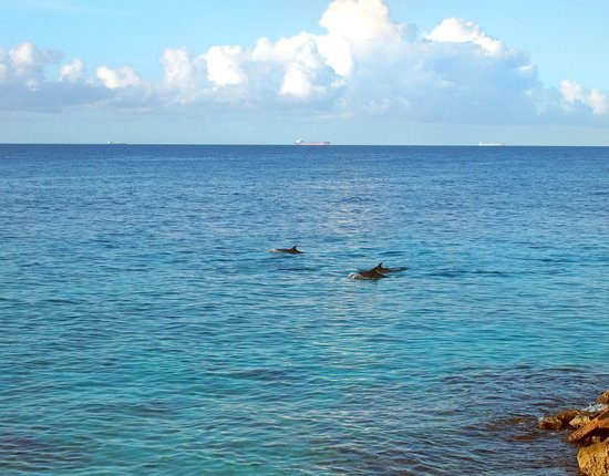 Waterside Apartments & Dive: Dolphins swimming by