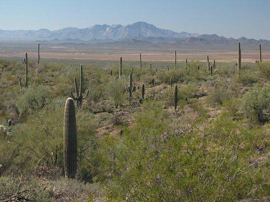 Arizona-Sonora Desert Museum: beautiful scenery