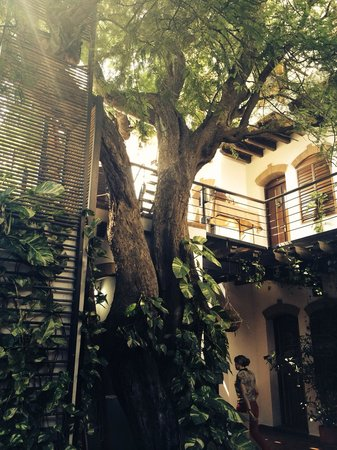 Casa de Isabella - a Kali Hotel: The 250 year old tree resting in the courtyard of the hotel