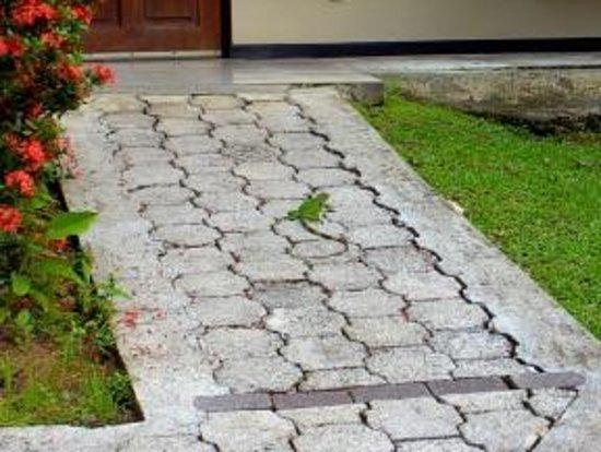 Tilajari Hotel Resort: Iguana