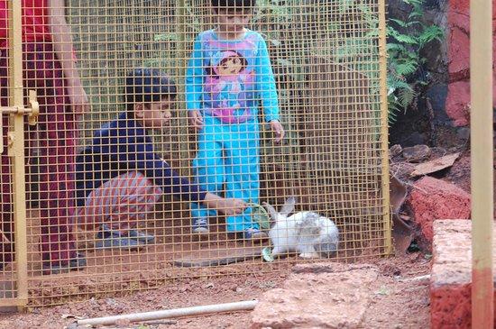 Amrutes' Nisarga Sahavas : childeren playing with rabbits