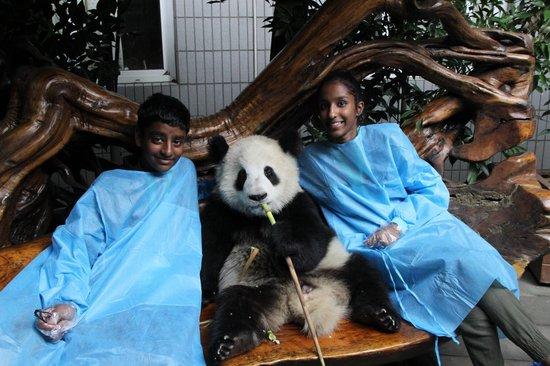 Giant Panda Breeding Research Base (Xiongmao Jidi): Personal visit with the Panda