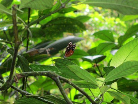 Parque Nacional Braulio Carrillo: Butterfly
