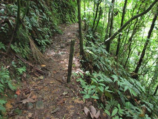 Parque Nacional Braulio Carrillo: Trails