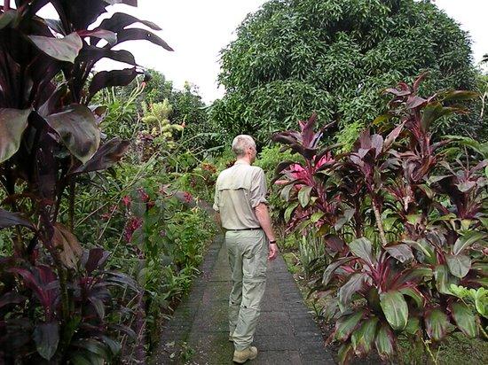 Volcano Lodge & Springs: Hotel garden