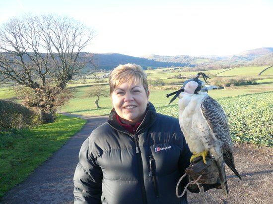 Black Mountains Falconry Centre: A pair of speedsters!