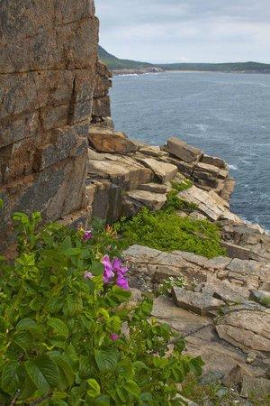 Atlantic Climbing School: View from Otter Cliffs