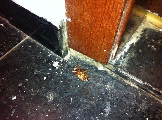 Koka Apartments: Cucarachas