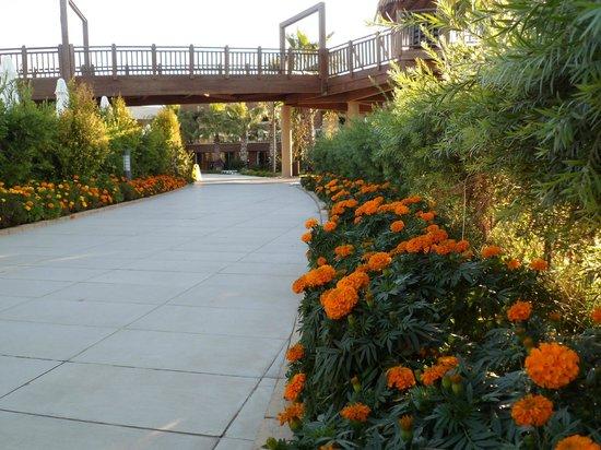 Sherwood Dreams Resort: .