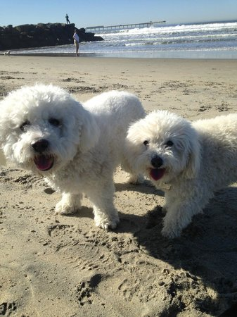 Ocean Beach Hotel: Dog Beach