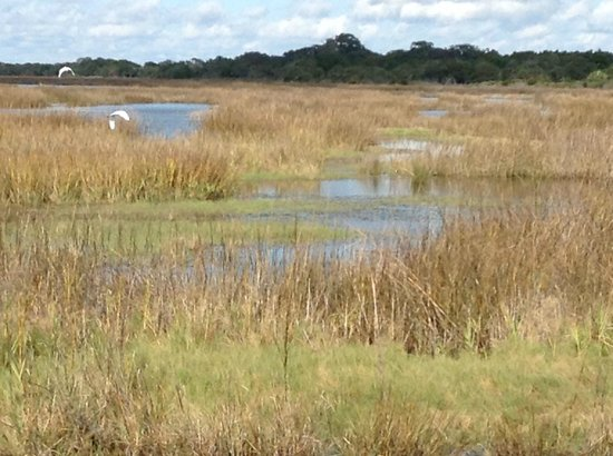 The Lodge on Little St. Simons Island: Wetlands with abundant wildlife