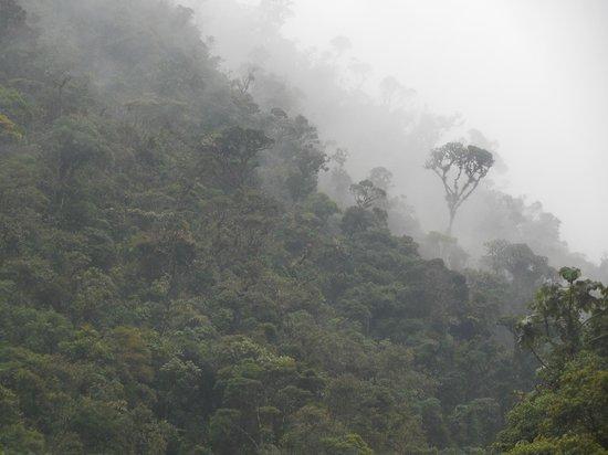 Copalinga: rainforest