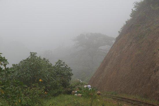 Monteverde TrainForest : Treees in the Mist 3