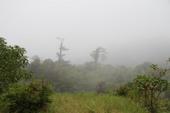 Monteverde TrainForest: Trees in The Mist 1