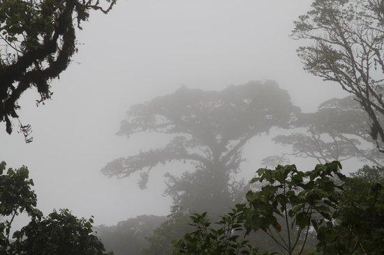 Monteverde TrainForest : Trees in the Mist 2