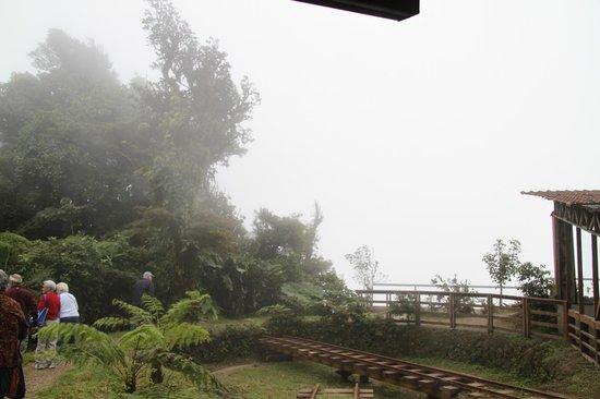 Monteverde TrainForest : Trees in the Mist 4