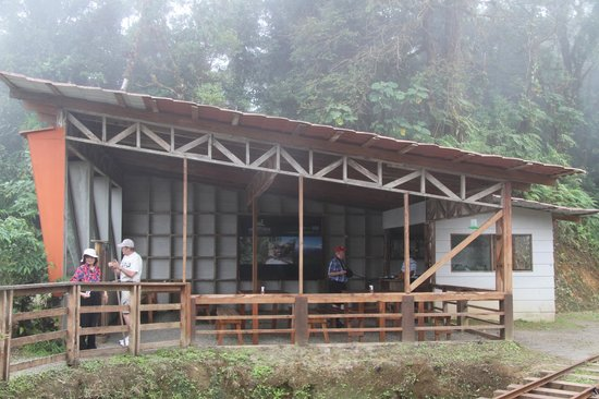 Monteverde TrainForest : Coffee Stop