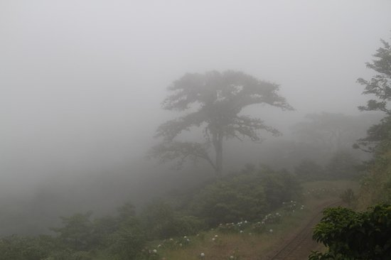 Monteverde TrainForest: Trees in the Mist 5
