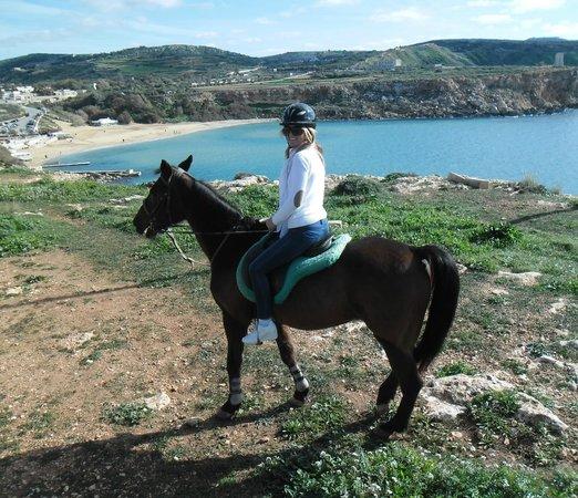 Golden Bay Horse Foto 2 - Golden Bay Ho...
