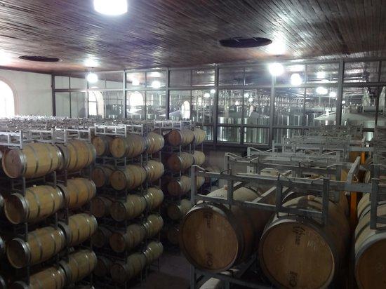 Bodega Luigi Bosca Familia Arizu: sala de barricas