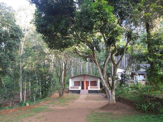 Forest Paradise - Ella: Our cottage