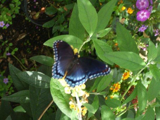 Butterfly Garden Foto Di Beech Creek Botanical Garden Nature Preserve Alliance Tripadvisor