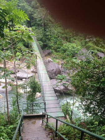 Villas Pico Bonito: Suspension bridge over the Congrejal
