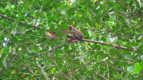 Caroni Lagoon National Park : Tree Boa