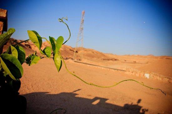 Arab Divers: Растение в пустыне