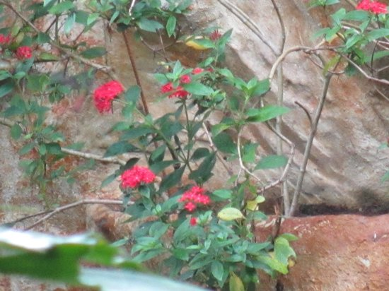 Arenal Hostel Resort: jardins
