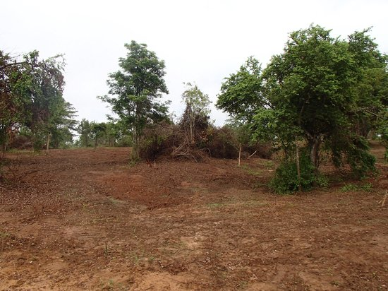 Udawalawe National Park: the land having been mechanically cleared for better viewing of animals from the road