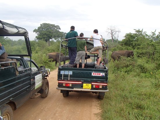 Udawalawe National Park: a cluster of jeeps pause for the elephants while engines run