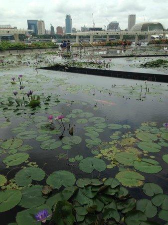 Museo de Arte y Ciencia de Marina Bay Sands: Beautiful pond outside the center.