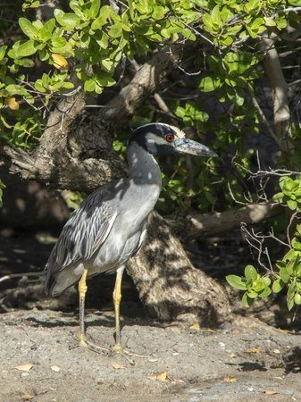 Grenadian by Rex Resorts : Wildlife on the hotel grounds