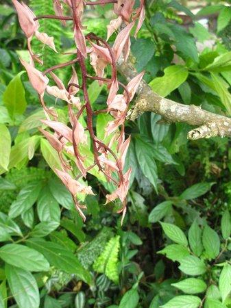 Monteverde Orchid Garden : celles-ci sentent le chocolat!