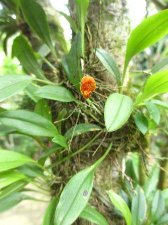 Monteverde Orchid Garden : minuscule!