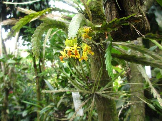 Monteverde Orchid Garden : celles-ci ressemblent à une fougère