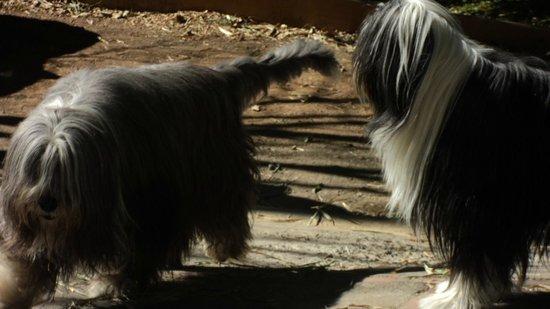 Tacacori EcoLodge: chiens hôtes