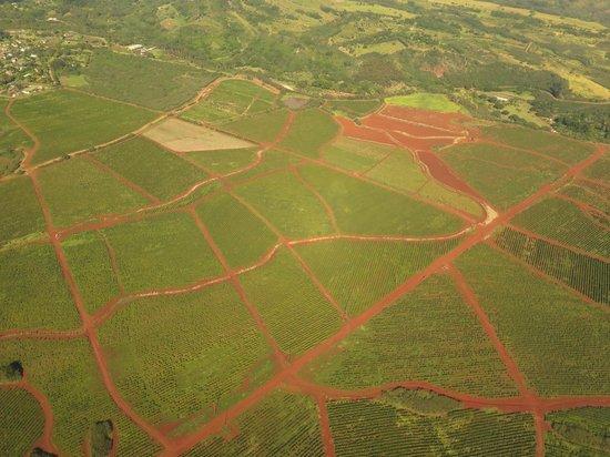 Air Ventures Hawaii: coffee plantations