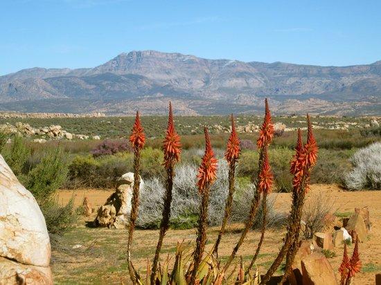 Bushmen Lodge