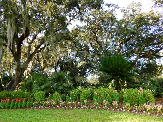 Bok Tower Gardens : Just a few of the beautiful flowers in the garden!