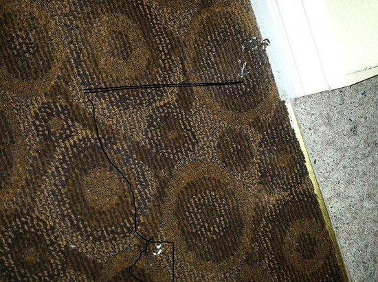 Glendale, CA: Grunge on badly worn carpet