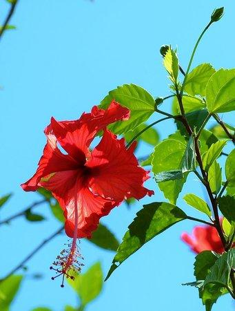 Blue Osa Yoga Retreat and Spa : beautiful gardens