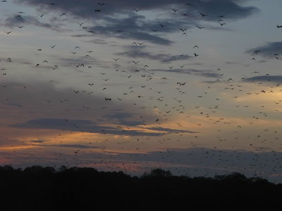 Divine Diving : The flying fox island at dusk