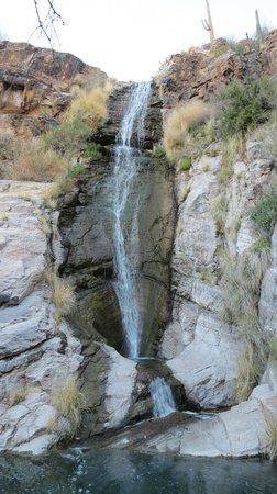 Loews Ventana Canyon Resort: Waterfall on property