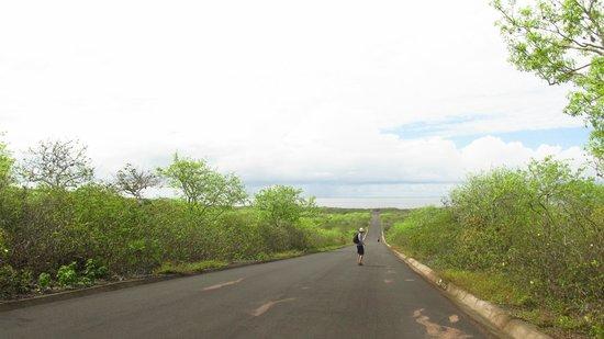 La Loberia : Camino a la playa