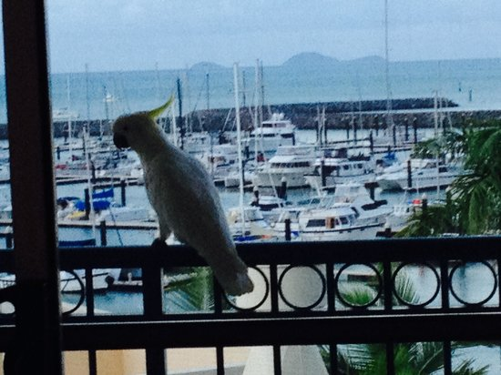 Shingley Beach Resort: A visitor on my balcony