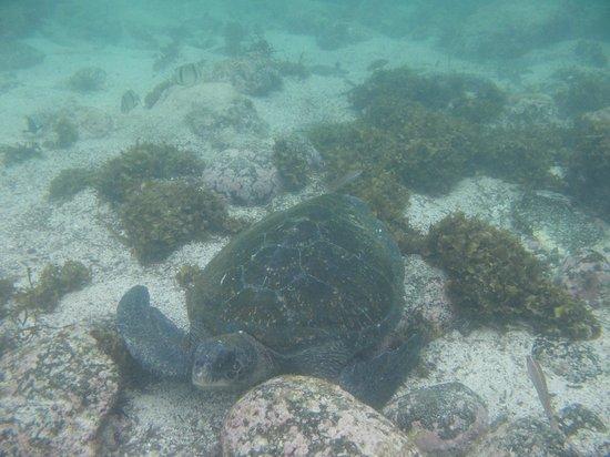 La Loberia : Tortuga Marina